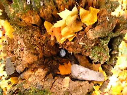 Baumstamm - Petling Versteck