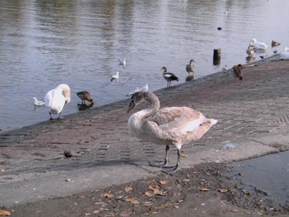 Wassertiere am Ufer