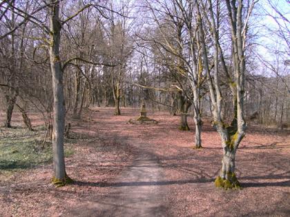 Naturpark Vogelsberg