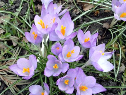 Frühling nach einem langen Winter