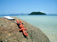 Travel Bug - Henry - Sonnenbad Koh Samui - GeoCaching