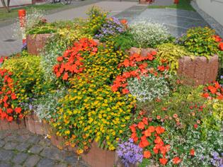 GeoCaching Tour - Altweibersommer - Blumenbeet
