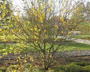Baum im Herbstlicht