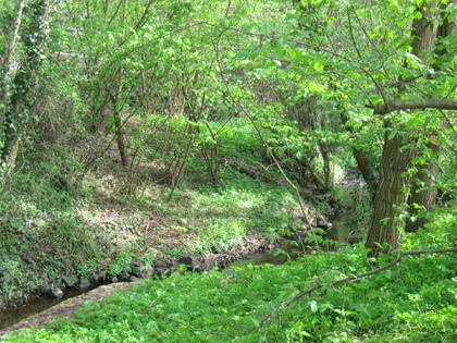 Kleiner Bachlauf im Wald